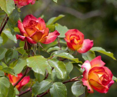 Populärsten Pflanzen im Frühling